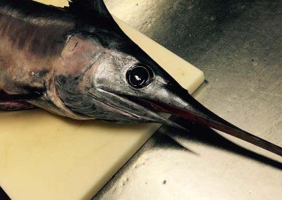 Pesce spada